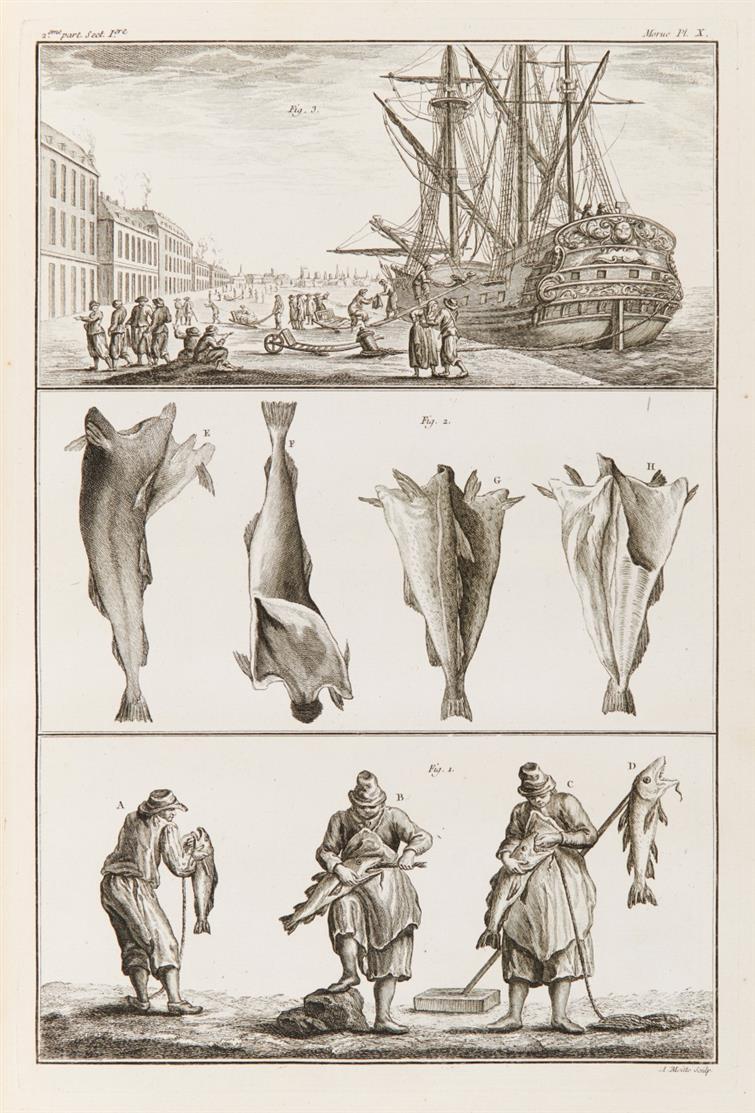 Duhamel du Monceau u. De la Marre, Traité général des pêsches et histoire des poissons. 3 Bde. Paris 1769-1782.