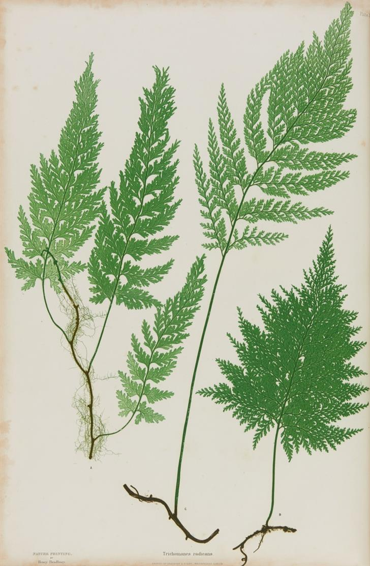 Th. Moore, The Ferns of Great Britain and Ireland. Nature-Printed. London 1857.