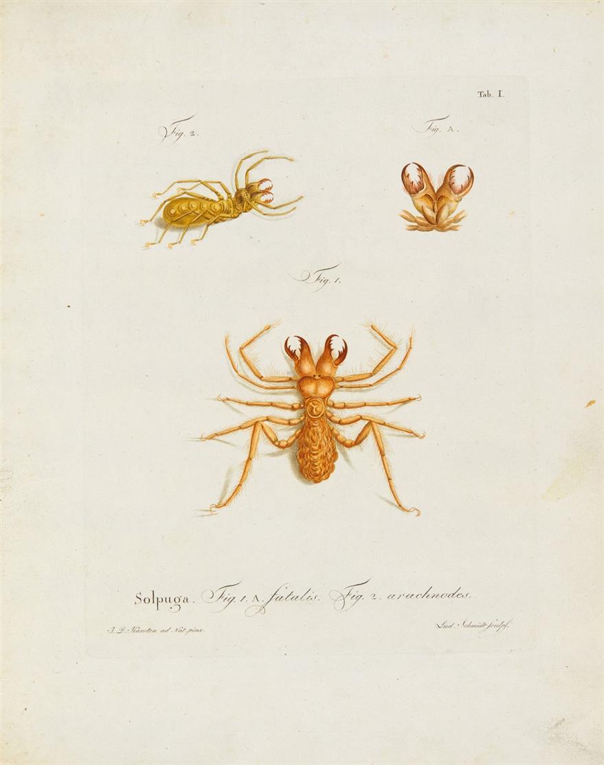 Herbst/Lichtenstein, Natursystem der ungeflügelten Insekten. H. 1-3 in 1 Bd. 1797-99.