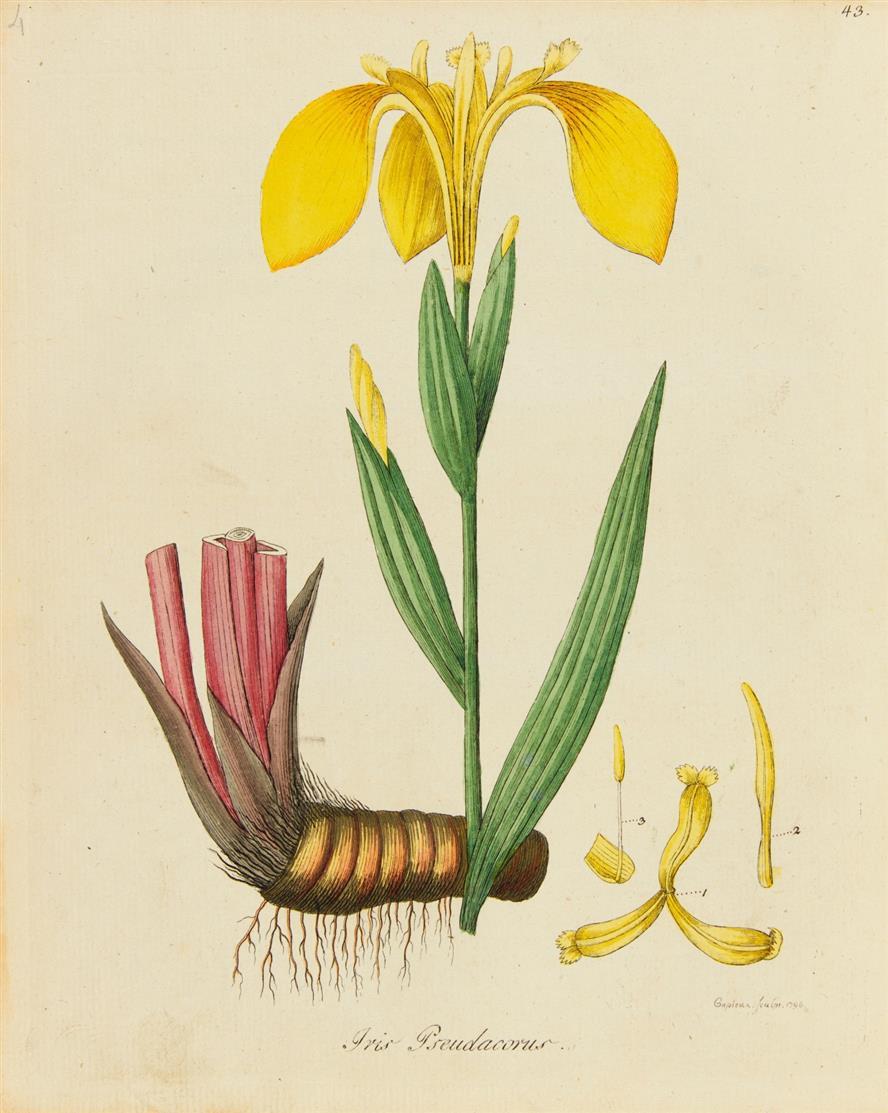 Dreves u. Hayne, Botanisches Bilderbuch für die Jugend. Bde. 1-4 (v. 5). Lpz. 1794-1801.