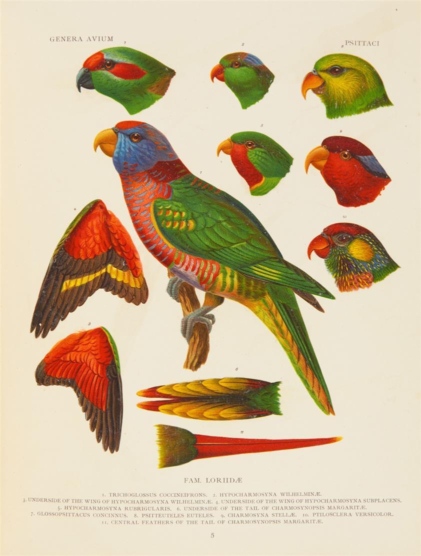 P. Wytsman, Genera avium. 26 Lieferungen in 1 Bd. Brüssel 1905-14.
