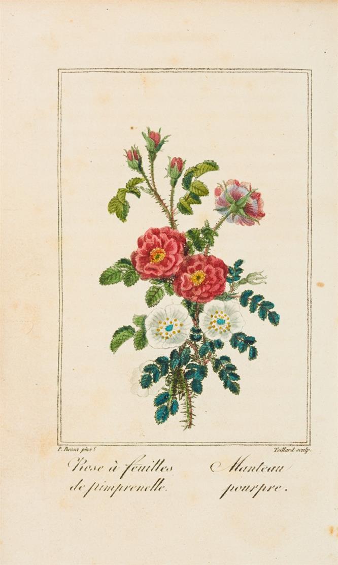 C. Malo, Histoire des roses. Paris 1818.