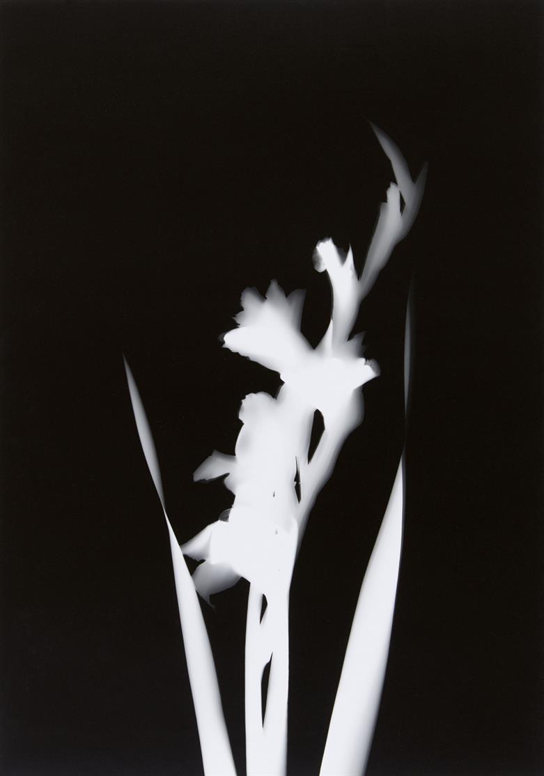 Floris Michael Neusüss. Vier Blütenfotogramme. 1997. Mappe mit 4 Blatt Originalphotogrammen. Verso monogrammiert.