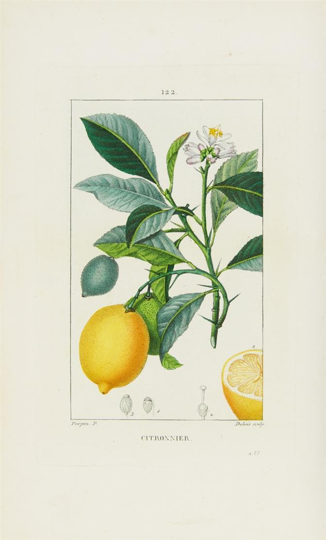 F. P. Chaumeton, Flore médicale. 6 Bde. Paris 1842-45. + A. Richard, Iconographie végétale. Paris 1841.