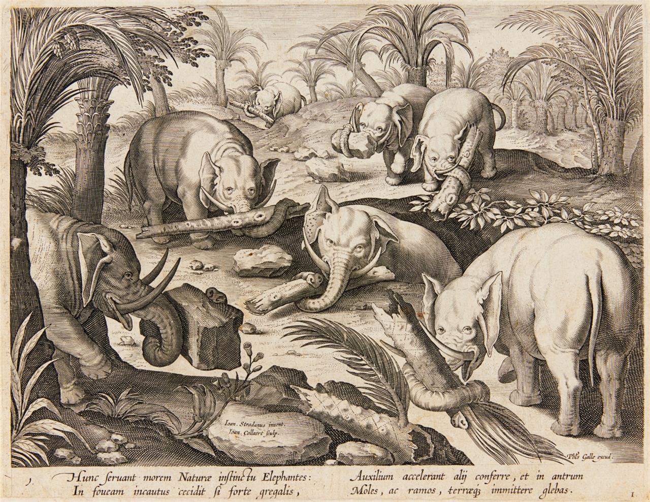 Jan Collaert nach Stradanus. Elefanten helfen sich aus einer Falle. Kupferstich. New Hollstein 1498 II (von IV).