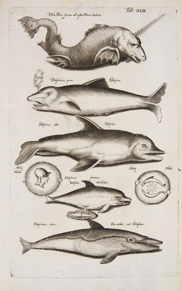 J. Jonston, Historiae naturalis de piscibus / de exanguibus aquaticis. 2  in 1 Bd. Ffm. 1650.