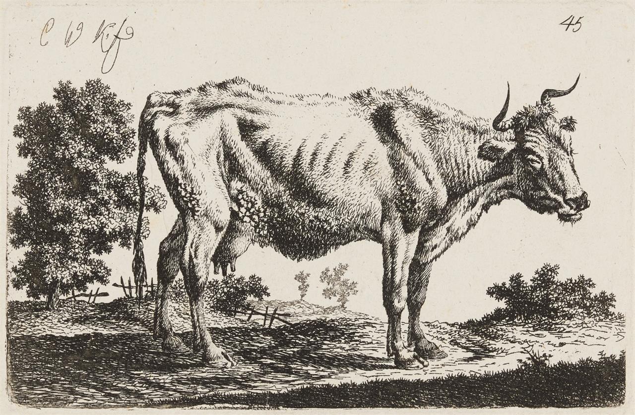 Carl Wihelm Kolbe. Stehende, abgezehrte Kuh, nach rechts gerichtet. Radierung.