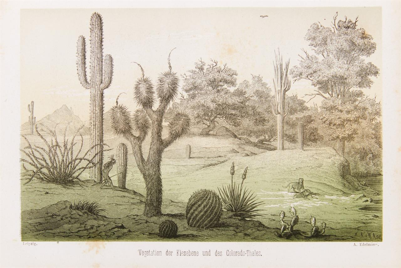 B. Möllhausen, Reisen in die Felsengebirge Nord=Amerikas. 2 Bände. Lpz 1861.