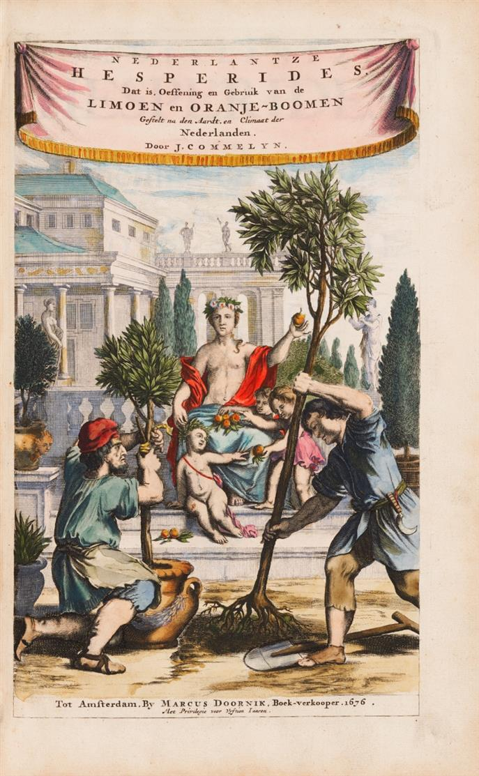 H. Causé, De koninglycke hovenier aanwyzende de middelen om boomen .... Amsterdam (1676). + angebunden: J. Commeli(j)n, Nederlantze Hesperides. Amsterdam 1676.