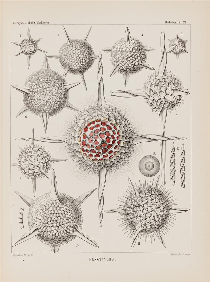 E. Haeckel, Report on the Radiolaria collected 1873-76. 3 Bde. 1887.