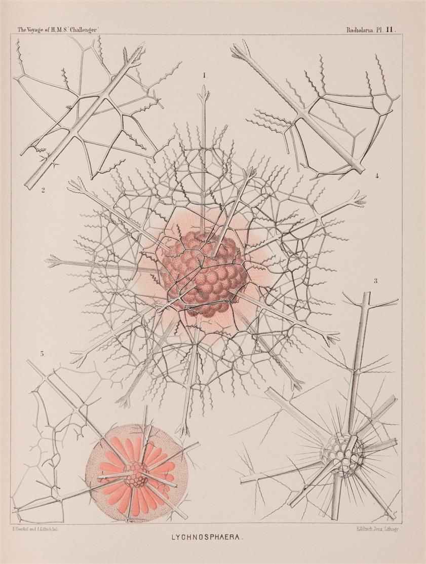 E. Haeckel, Report on the Radiolaria collected 1873-76. 3 Bde. 1887.