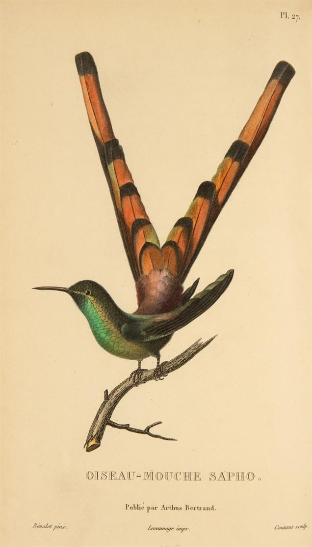 R. P. Lesson, Histoire naturelle des oiseaux-mouches. Paris 1829-30.