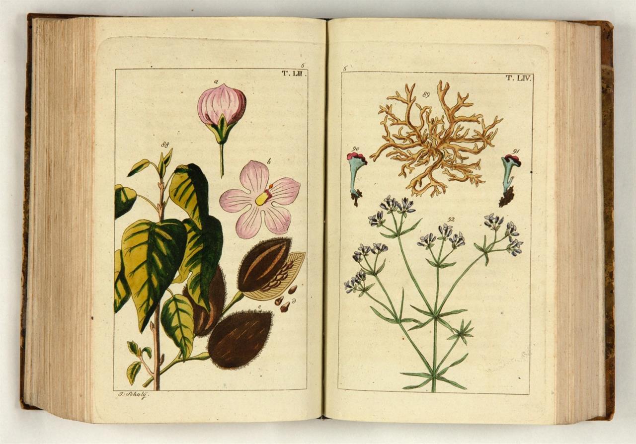 G. T. Wilhelm, Unterhaltungen aus der Naturgeschichte. Des Pflanzenreichs sechster Theil. Wien 1817.