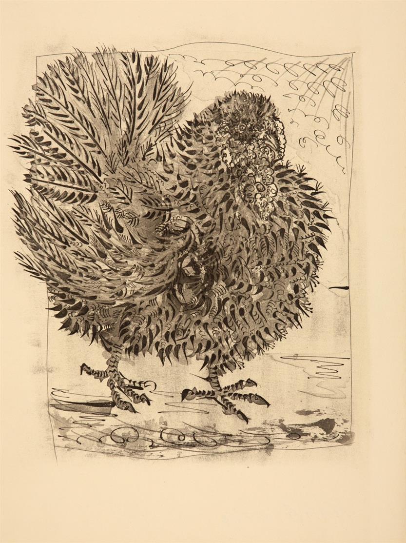 Pablo Picasso. Le Dindon (aus: Buffon). 1942. Aquatintaradierung. Nicht signiert. Bloch 346.